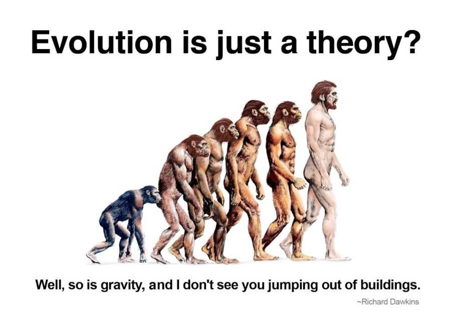 Teori Evolusi